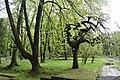 Трускавецький парк 11.jpg