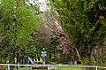 Ужгородський Сквер Т.Масарика P1360465.jpg