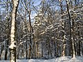 Украина, Киев - Голосеевский лес 155.jpg