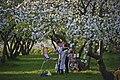 Цветут сады в Коломенском.jpg