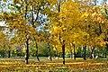 """Черкаський парк """"Надія"""", код 71-101-5020 06.jpg"""