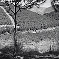 הזורע - יער ורבורג.-JNF030360.jpeg
