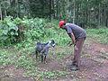 കോലാട് goat02.JPG