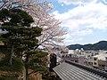 いの町の琴平神社の桜 - panoramio.jpg