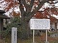 仁井田のモミジ - panoramio.jpg