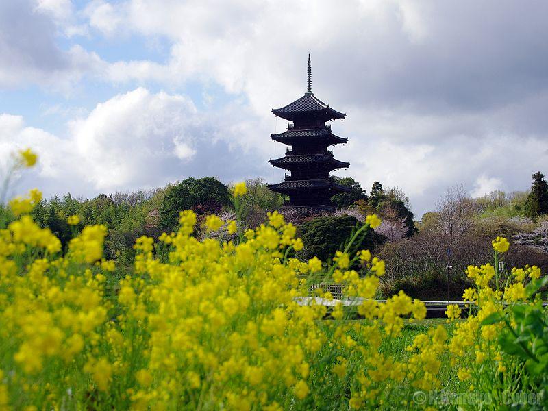 File:備中国分寺 (Bitchu Kokubun-ji) 07 Apr, 2013 - panoramio.jpg