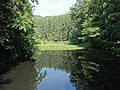 大池 自然の森 平川市 - panoramio.jpg