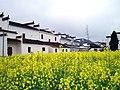 婺源映像(Wuyuan)-20 - panoramio.jpg