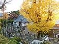 尾崎・宮山(如来寺の銀杏) - panoramio.jpg