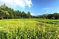 木流川散策路の風景 - panoramio.jpg