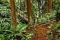 -5 - Faial da Terra florest - S.Miguel island - Azores (27996543629).jpg