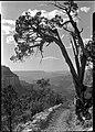 00512 Grand Canyon Yaki Point (7945658176).jpg