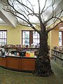 019.transforming-institutions.multnomah-county-library-with-tree.jpg