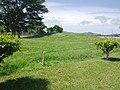 02-003-DSA Parque arqueologico del Caño -- Monticulo funerario.jpg