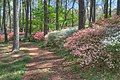 15-13-007, azalea trail - panoramio.jpg