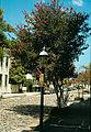 1979-08-14-Charleston-143.jpg