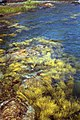 1989-08-28b TidePoolCloseup adj.jpg