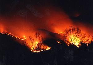 2000년 4월 강원도 고성군 동해안 산불.jpg