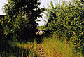20010524 Maastricht; overgrown rail track of line 20 Hasselt - Maastricht in Bosscherveld.jpg