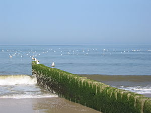 English: Groyne near Westerland, Sylt, Germany...