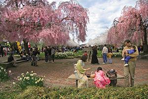 Subaru Cherry Blossom Festival of Greater Philadelphia - Image: 2008 Subaru Cherry Blossom Festival of Greater Philadelphia 1