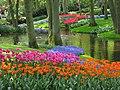 20090501-03 Tulpenweekend Nederland (0169).jpg