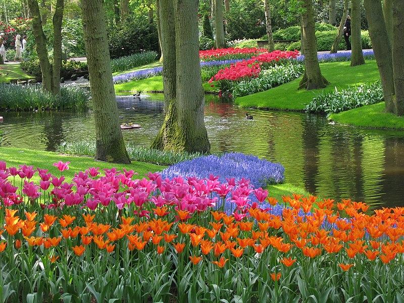 File:20090501-03 Tulpenweekend Nederland (0169).jpg