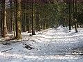 2010-02 Wittekindsweg Nonnenstein-Heidbrink 010.jpg