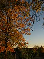 2011-10-26-174025 49,412601, 8,665412.JPG - panoramio.jpg