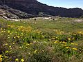 2014-07-25 15 46 35 Wildflowers in the saddle between upper Hennen Canyon and upper Right Fork Seitz Canyon below Ruby Dome.JPG
