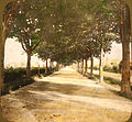 2192 - Waldensian - Opening Slide (Tree lined road).jpg