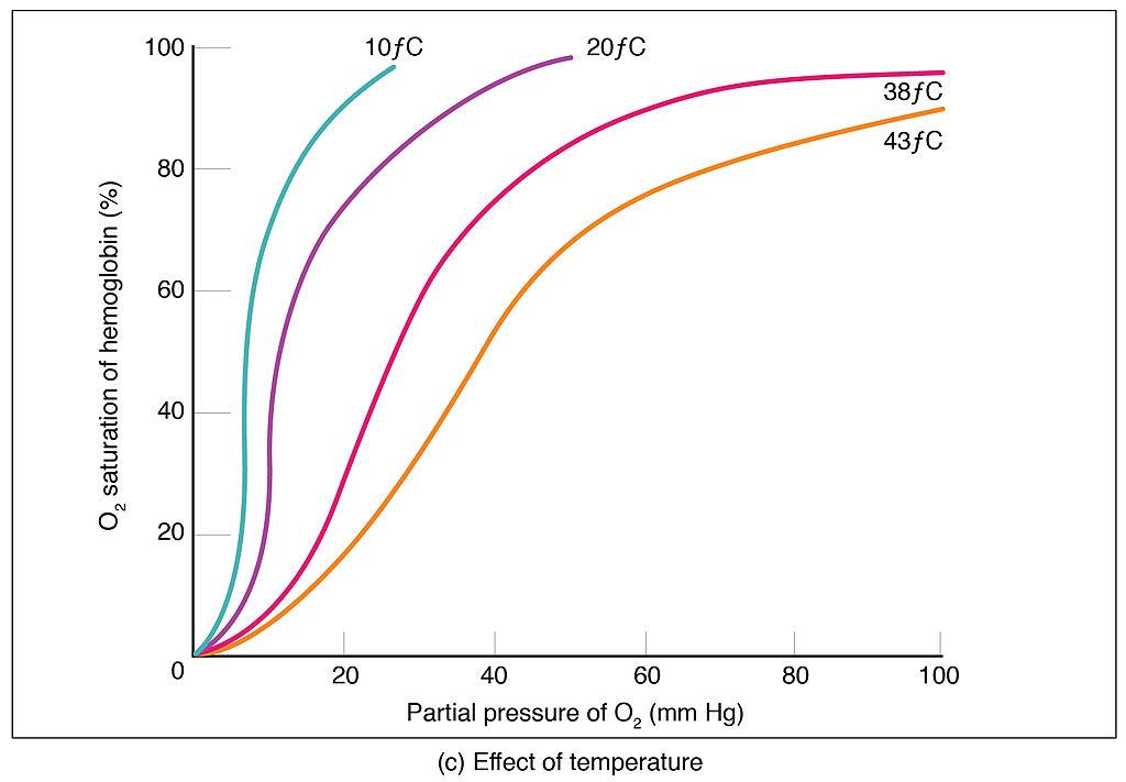 Px Oxygen Hemoglobin Dissociation C