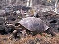25-san-cristobal-tortoise.jpg