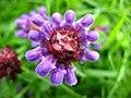 2577 - Innsbruck - Flower.JPG