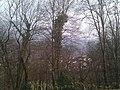 73000 Chambéry, France - panoramio.jpg