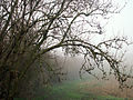 A December view of Woodnook Valley, Little Ponton, Lincolnshire, England 05.JPG
