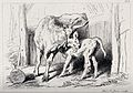 A cow licking its calf while it is feeding on her. Etching b Wellcome V0020821.jpg