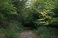 A walk through Twyford Wood, No 6 - geograph.org.uk - 272081.jpg