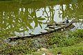 Abandoned Boat - Stream Ichamati - Purba Para - Baduria - North 24 Parganas 2015-04-11 7203.JPG