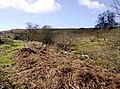 Above Llanbradach Fawr - geograph.org.uk - 735916.jpg