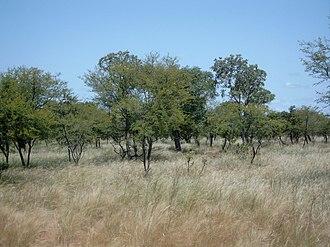 Paleotropical Kingdom - Savanna in Burkina Faso
