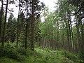 Achray Forest, above Loch Drunkie - geograph.org.uk - 1320745.jpg