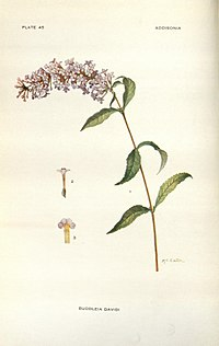 Addisonia (PLATE 045) (8577484520).jpg