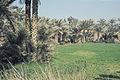 Aegypten1987034 hg.jpg