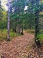 Alaska Botanical Garden ENBLA11.jpg