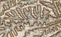 Albon-d'Ardèche sur la carte de Cassini.png