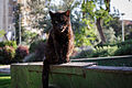 Alley cat.jpg