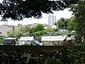 Allotment gardens - geograph.org.uk - 595542.jpg
