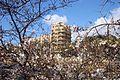 Almond tree in Downtown Nicosia in the evening Republic of Cyprus.JPG