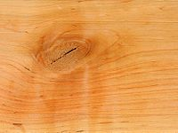 Alnus glutinosa wood tangent section 1 beentree.jpg